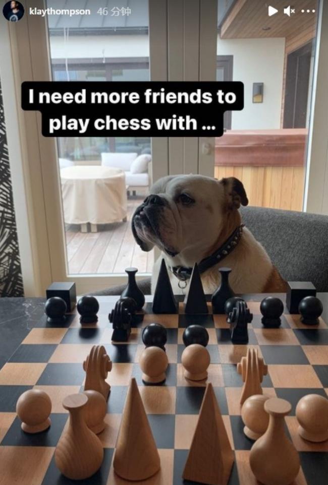 汤神社媒晒与爱犬下棋 结果Rocco直接趴倒