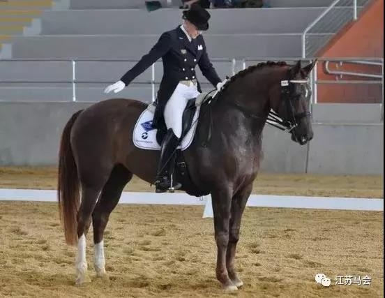 骑手与马的疏导
