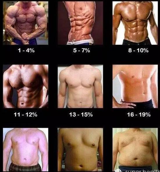 率 脂肪 女子 平均 体