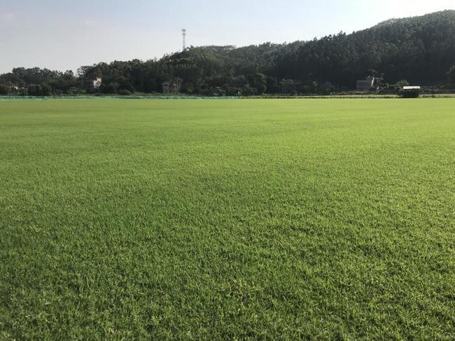 位于惠州博罗的朝向草坪草选育与研究基地