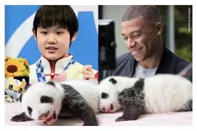 次元壁破了!张家齐和姆巴佩成为旅法熊猫命名人