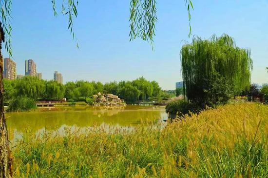 """浐灞生态区水生植物冬季""""清仓"""" 让河道畅快""""呼吸"""""""