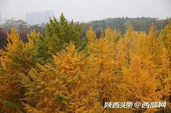 一片树林给了这个城市一片宁静,一片金色给了这个阴冷的日子一抹温暖。