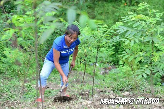 2018年夏天,陈金兰正在地里锄草。