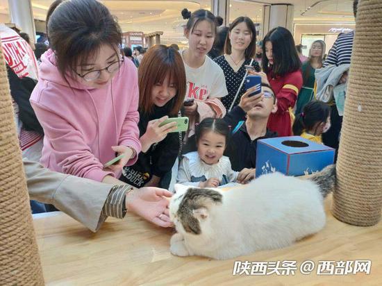 西安大融城举行猫咪园游会