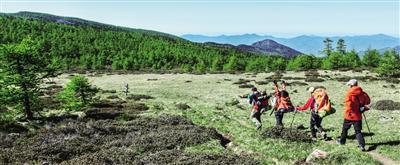 秦岭冷杉林分布在海拔2450米-3300米地带