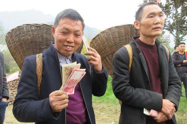 """安康""""魔芋王""""重47.6斤 芋农喜获丰收心里乐开花"""
