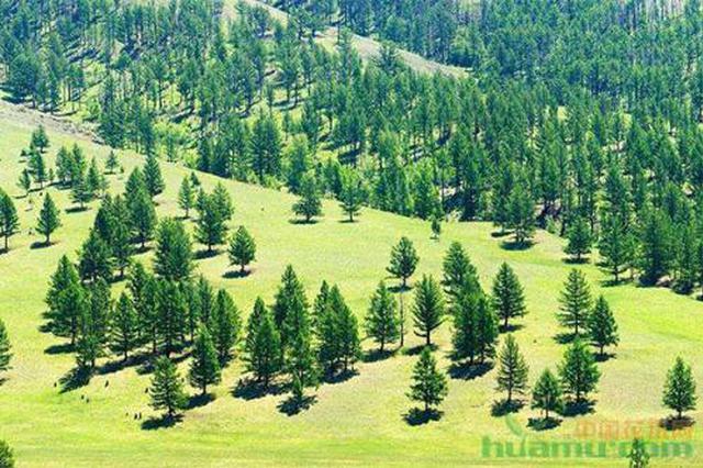 生态脱贫 陕西林业产业总产值去年达1404.5亿元