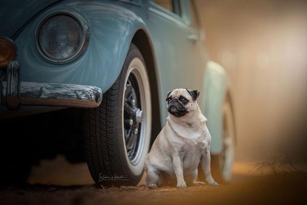 狗狗和爱车是男人的好伙伴 不如为他们拍组大片吧