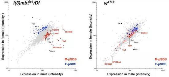 ▲雄性果蝇(红色)和雌性果蝇(蓝色)的致死性恶性脑瘤中,有些蛋白质的表达水平具有显著差异(图片来源:参考资料[1])