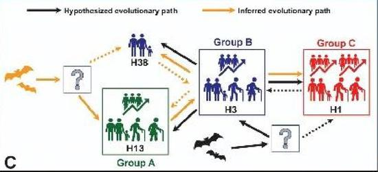 爷爷辈的H13、H38,可能有两条进化路线(图片来源:参考文献1)