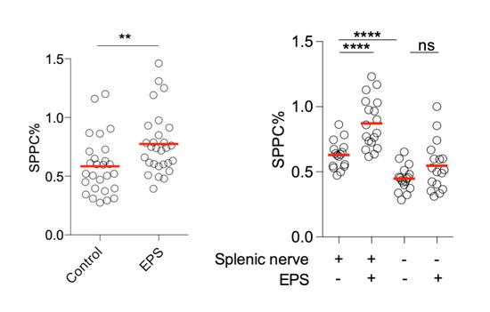 """Control:对照组,EPS:""""登高而立""""组。左图:登高而立后,小鼠抗体免疫应答增强。右图:在有脾神经的时候,小鼠的抗体免疫能力显著性增强;脾神经去除后,显著性消失。"""