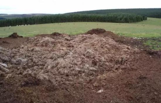 猪粪堆(图源:Adam Ward)
