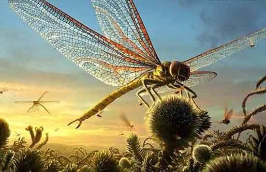 ▲石炭纪时期的巨脉蜻蜓翼展接近1米(图片来自网络)