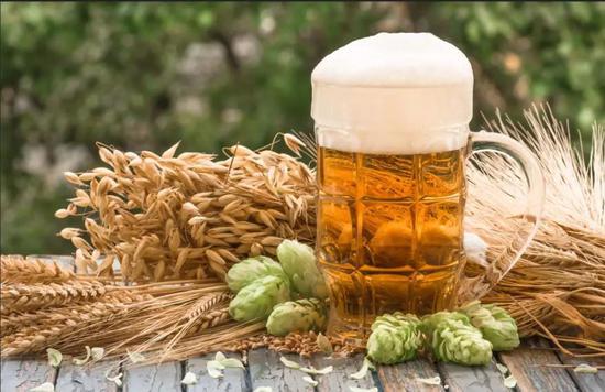 酿造啤酒的原料大麦和啤酒花。图片来源:图虫创意