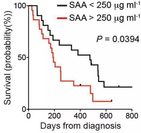 较高的血SAA水平与预后不良相关
