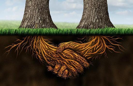 图1。 大树的根系(图片来源:veer图库)