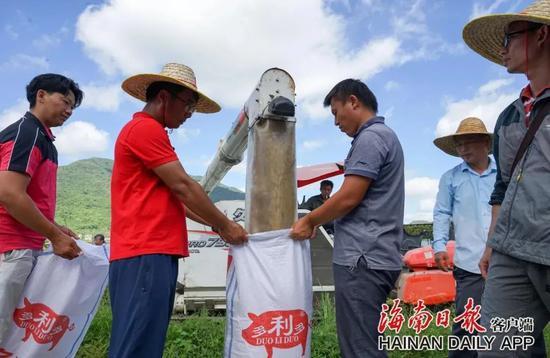 """5月9日上午,在三亚水稻国家公园示范点,""""超优千号""""超级杂交水稻开始测产。武威 摄"""