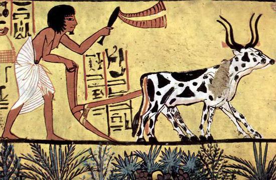 ○相比狩猎,农业存在诸多劣势。| 图片来源:Wikipedia