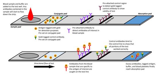 迅速诊断检测机理暗示图(图片来源:参考原料[4])