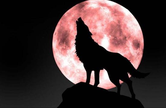 """▲""""两个月亮""""或者""""不夜城""""可能会影响动植物的正常作息(图片来自网络)"""