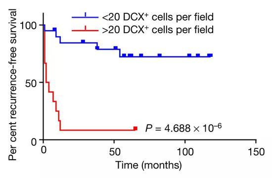 ▲表達雙皮質素細胞的數量與患者疾病的嚴重程度之間的關系[1]