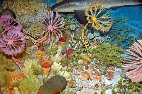 泥盆纪海底生物模型图/wikicommons