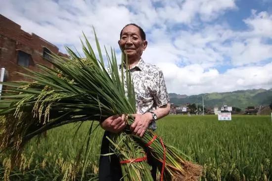 袁隆平是真正的杂交水稻之父吗?