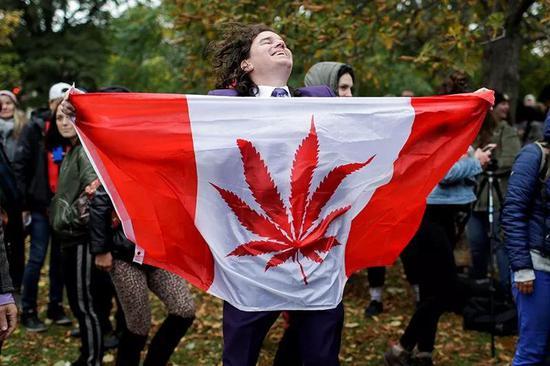 添拿大将迎来大麻钻研的终局丰收季。