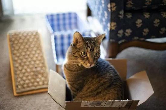 薛定諤選貓作為實驗對象是不是因為貓愛鉆盒子……圖片來源:Unsplash