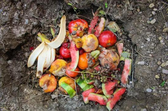 厨余垃圾堆肥(图片来源:Veer图库)