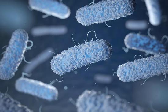 单核细胞增多性李斯特氏菌(图片来源:thebioscientist.org)