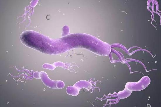 """人类历史上""""最成功""""的病原体幽门螺旋杆菌新克星找到啦"""