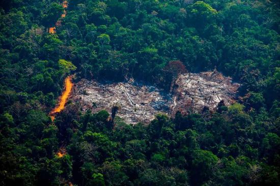 巴西帕拉州阿尔塔米拉的森林砍伐。来源:Joao Laet/AFP via Getty