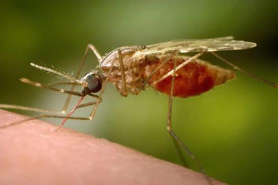 传播疟疾的疟蚊 | Jhu.edu