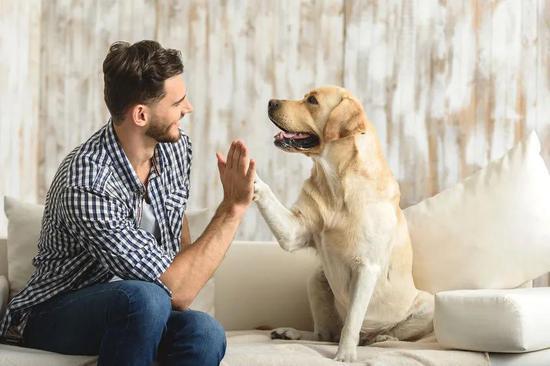 脑洞大开!科学家让AI跟狗学癌症检测