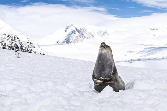佩戴传感器的象海豹将协助钻研人员搜集海洋数据,此举旨在钻研南极的思韦茨冰川(Thwaites Glacier)