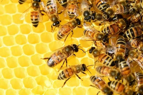 蜂蜜为什么不会变质?诚信在线下载