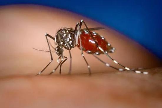 一杯糖水真的可以驱蚊吗?科学家说可以试试