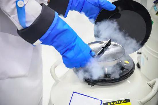 现在,行使液氮迅速冷冻是冻卵较为常用的技术。(图源:shutterstock)