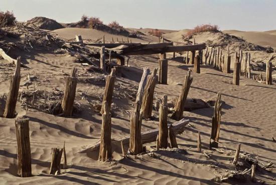 古克里雅河末了的喀拉墩古城遗址 | 干枯的木桩在黄沙中坦然站立,犹如在期待那些离去的人们。摄影师@刘玉生