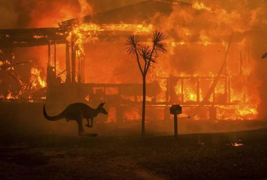 逃离火灾的袋鼠。(图片来源:MATTHEW ABBOTT/NEW YORK TIMES/REDUX/EYEVINE)