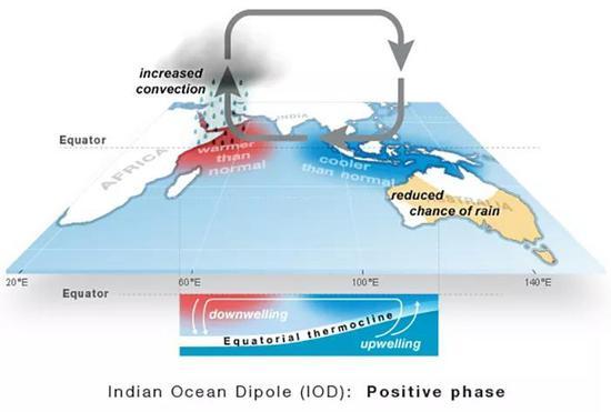 2019 年 10 月,印度洋偶极指数正向迸发招致澳大利亚降雨减少,非洲东部降雨增加。
