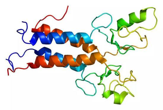 BRCA1蛋白结构