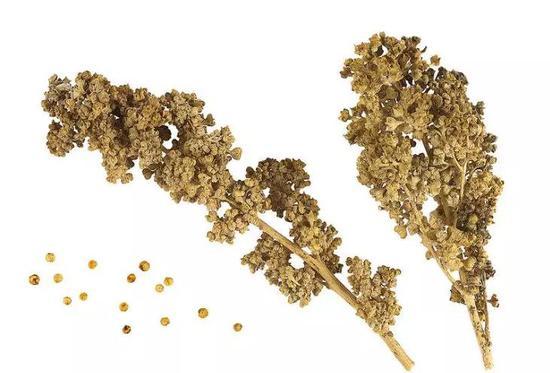 藜麦 (图片来源:Wikipedia)