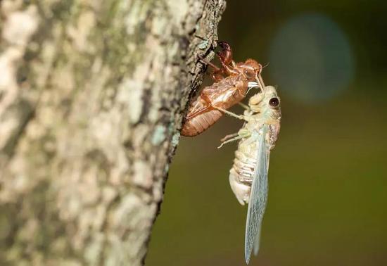 蝉的一生很传奇,不要嫌人家聒噪