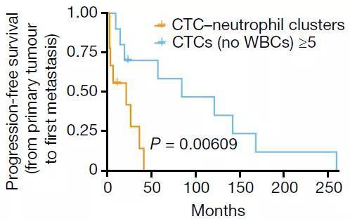 检测到至少5个CTC(蓝)的患者和至少1个CTC-中性粒细胞(黄)的患者的无进展生存率随时间(月)的变化