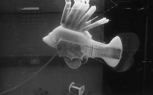This soft robot fish runs on a battery fluid that circulates around the body.  Image source: James Pikul