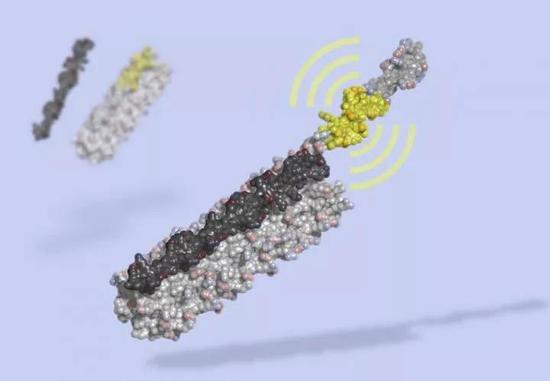 ▲研究人员们制作的LOCKR艺术图,其中黑色部分像一把钥匙,能够打开灰色的笼子,释放出具有生物活性的多肽(图片来源:Ian Haydon, UW Medicine Institute for Protein Design)