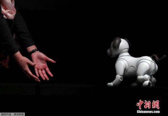 """资料图:2017年11月1日,日本东京,索尼公司首席执行官平井一夫在新闻发布会上展示机器狗""""Aibo""""。"""
